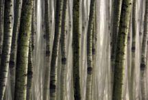 Piante Alberi Foreste
