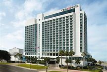 2014 Conference / Corpus Christi, TX - this year's location of the Texas SILC annual Conference.