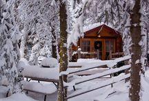 Cabin in the Woods / by Marisa Doan