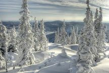 Winter / by Linda Savinsky