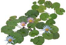 ARCH | graf | plants