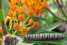 Feed the Caterpillars & Save The Butterflies