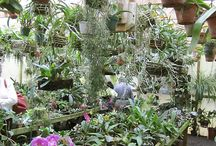 Orchid greenhouse / Orchids