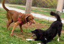 Examiner Articles / Articles I've written as the Cincinnati Animal News Examiner