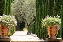 Gardens - Jardins e quintais - Hortas e pomares / by Maria Fernanda