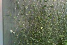 zöldhomlokzat - green wall