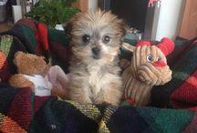 ROSIE / Puppy Love.