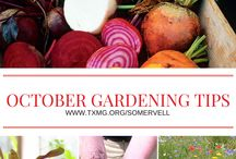 SCMGA Gardening Tips / Tips for gardening year-round in North Central Texas.
