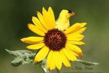 Natures Healing Images Website