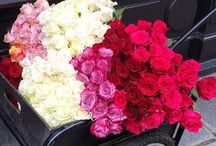Fortunato. Kwiaty w pudełkach / Jesteśmy tu  Szpitalna 5 w Warszawie !!! ZAPRASZAMY róże w pudełkach, wybierz swój box