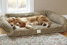 Dogs / Funny pictures, cute pictures, home made dog treats, dog beds,-and toys and other useful ideas