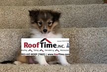 (WOOF Time!) Piper our official adorable Roof Time, Inc., sheltie mascot! / Official Roof Time, Inc. mascot. Piper is a beautiful 12 month old sheltie. She is 12 months old....still a puppy learning to adapt in this world and in our family. Piper is the runt from her litter of 5. She wasn't necessarily expected to live although; she has such a strong will and high strung personality. We are proud to be welcoming her into our home and share her with our Roof Time, Inc., family of followers and customers. We  appreciate all of you and hope you enjoy watching Piper grow!:)