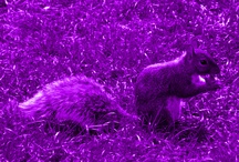 purple pazzazz / by Sylvia Griffin
