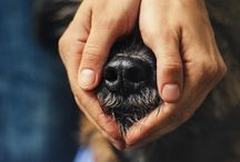 Oh my dog / by Juliet Karraker