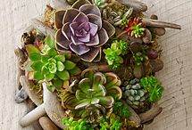 Driftwood Wall Art with Succulents