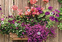 Blumenkästen, Balkon, Terasse