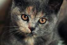 Kedi / by Sweetie Tien