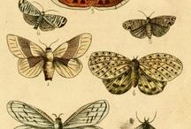 НАСЕКОМЫЕ-Бабочки