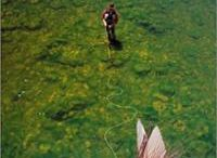 Fly Fishing Books / Books that will help you learn and cook!