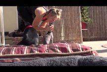 Sauvetage animaux ~~ Rescue animals