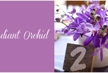 Radiant Orchid / The 2014 Color of the Year