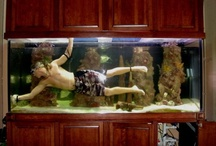 Monster Tanks / Bigger than your average aquarium, monster tanks are for serious fishkeepers!