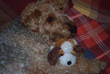 Kira & Freunde / es geht um meiner Hund und seine Freunde