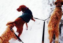 Toronto Dog Walks - Winter Dog Walking 2013/2014 / Walking the dogs - group walks, private walks, doggie daycare.
