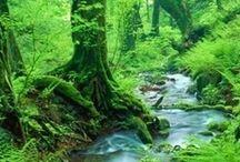 malen Wald