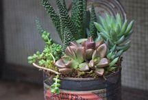 vet plant tin
