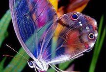 Butterflies / Beauty butterflies