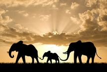 Amazing elephants