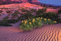 Coral Pink Sand Dunes State Park / by Clarion Suites St. George, Utah  Choice Hotels