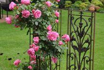 Květiny na zahrade