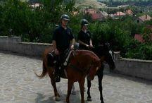 my horses