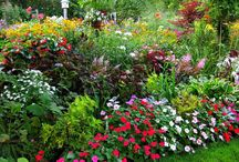 gardening, plants & more