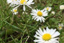 Flower / Nature fleur