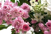 """Just Because"" / We Deliver Flowers, Plants & Gourmet Baskets to St Petersburg, St. Pete Beach & Seminole Florida. Through our network of floral partners, we offer flower delivery nationwide and to most foreign countries. In addition to a wide variety of fresh flowers, we offer green and blooming plants, fresh fruit and gourmet baskets, balloons, plush animals and a boutique of gift items. Call us at 800-237-3907 (or 727-521-1883),"