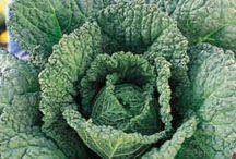 Quick tips on veggies / by Emilee Fortner