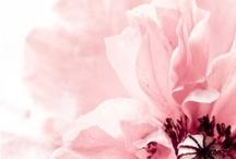 Poppies / Ukochane maki i maczki