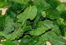 Cuisine : plantes aromatiques
