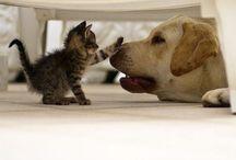 Fury Friends / I love animals!! :)