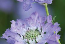 delizie floreali