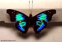 Butterfly / These are some beautiful butterflies!!! / by J Marie McKee