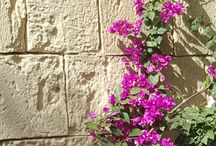 Maltese Flora and Fauna.