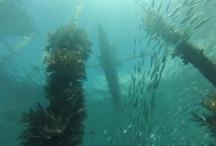 Scuba diving in Papua
