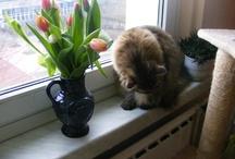 katzentipps24.de - Meine Katze / Fotos und Videos meiner Katze und viele Tipps aus meiner Website http://katzentipps24.de