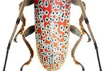 Szép rovarok
