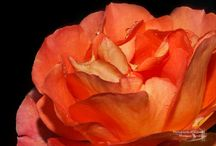 COLOR THERAPY/Orange Tangerine