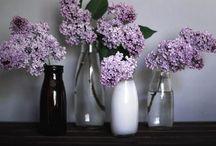 FLORA / flowers,plants, garden